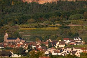 Conférence Découverte : La France des vins et des terroirs